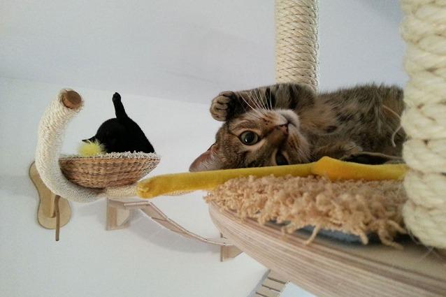Design per gatti le 15 idee pi originali per rendere - Cucina casalinga per gatti ...