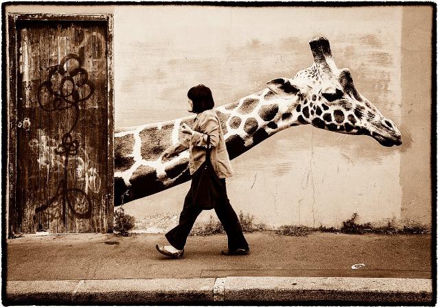 Girafe rue des Rondeaux – Sophie Photographie