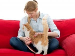 con il gatto sul divano