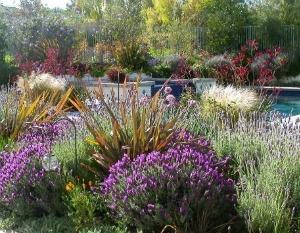Come realizzare un giardino mediterraneo consigli per for Cespugli giardino