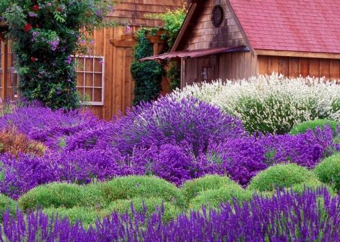 Come realizzare un giardino mediterraneo consigli per disporre piante e fiori - Realizzare un giardino ...