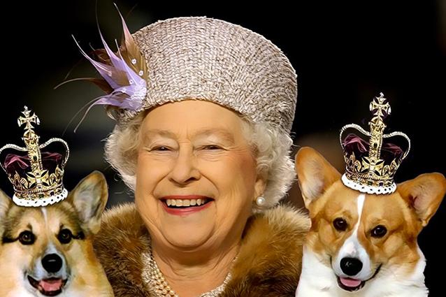 La Regina Vieta A William E Kate Di Portare Il Loro Cane A