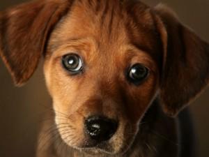 Sarezzo, cucciolo di cane di soli 6 mesi ucciso da un boccon