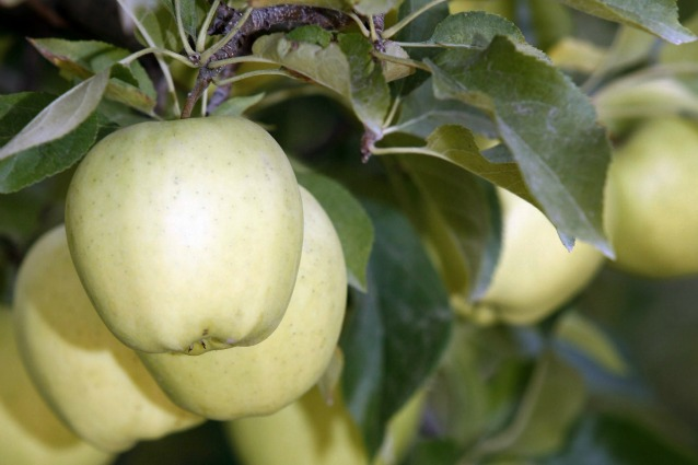 mela che non si annerisce