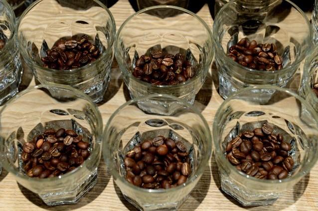 caffe rischia estinzione arabica