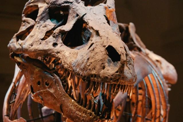 dinosauro fossile