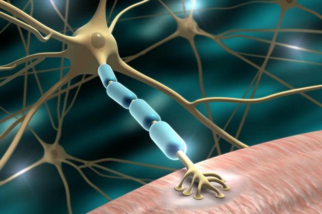 Illustrazione di un neurone