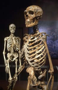 neanderthal_sapiens