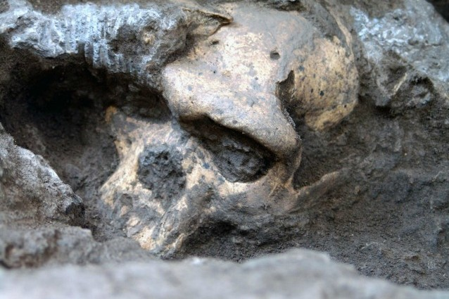 Uno dei crani rinvenuti a Dmanisi in Georgia, forse destinato a riscrivere la nostra storia evolutiva