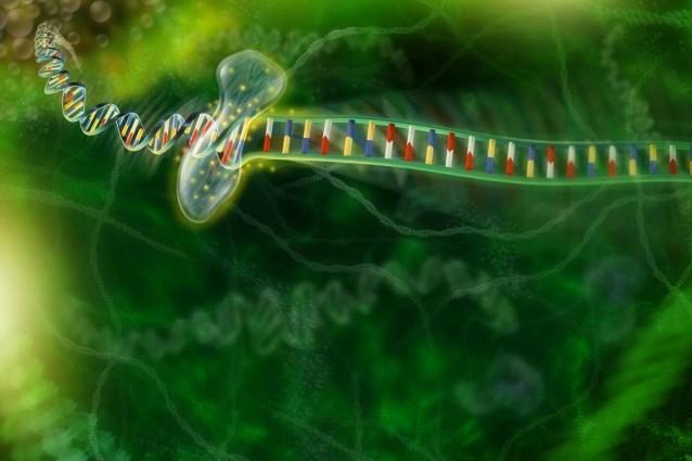 L'editing genetico contro la distrofia muscolare