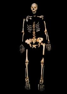 Lo scheletro di Sima de los Huesos