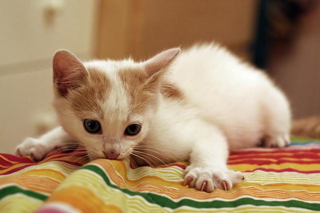 Secondo il tuo gatto, tu sei un felino come lui
