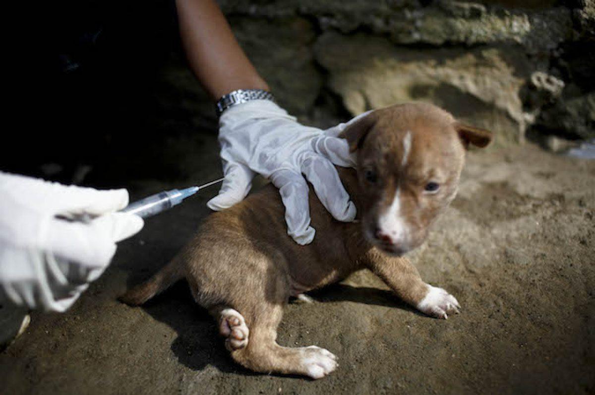 Cimurro E Cani Cosè La Malattia Infettiva Che Uccide I Cuccioli