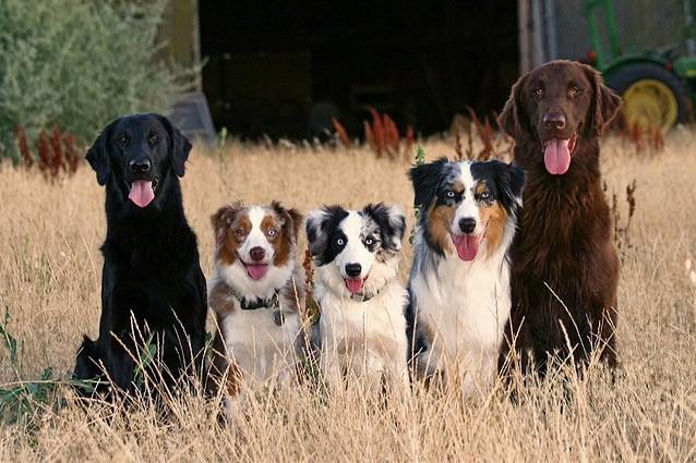 Cani taglia media e grande