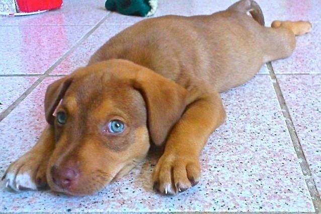 Un cucciolo di cane a casa cosa fare istruzioni per l 39 uso for Recinti per cuccioli di cane in casa