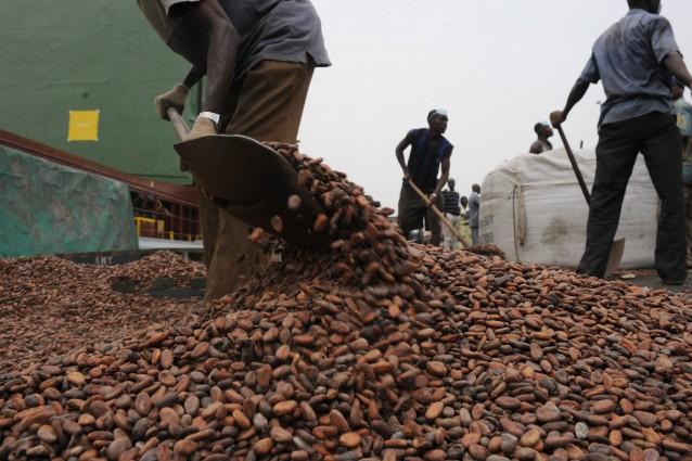 Secondo l'international center for tropical agricolture, le coltivazioni di cacao in Africa dovranno presto combattere contro il riscaldamento globale.
