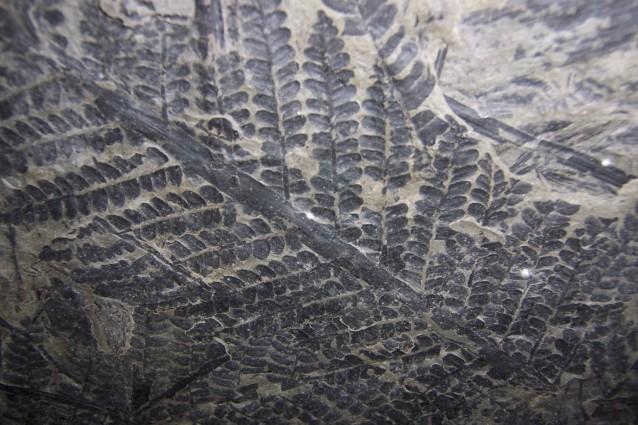 Venuta alla luce in Mongolia la foresta rimasta nascosta per 300 milioni di anni sotto le ceneri del vulcano che la seppellì completamente nel corso di un eruzione. La sua storia ricorda quella della ben più recente Pompei in cui il tempo sembra essersi fermato in un istantanea vecchia di secoli.