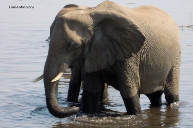 Chobe National Park - Botswana. Animali e fotografia