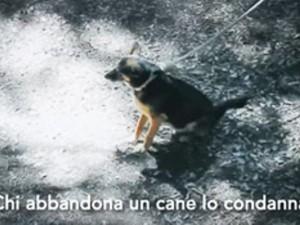 Abbandonare un cane è un reato!