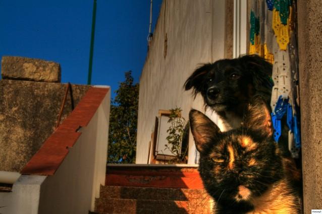 Cane gatto e uomo amicizie a confronto autori fanpage - Due caratteri diversi ...