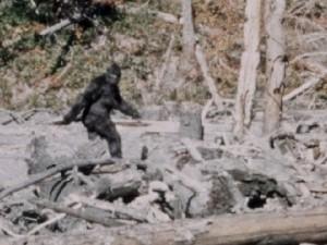 """""""Il Bigfoot è stato ucciso, ma il suo corpo è stato fatto scomparire"""""""