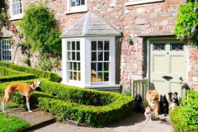 In Inghilterra il primo hotel di lusso per cani