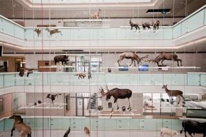 MUSE. Fotografo Claudia Corret, Archivio MUSE Museo delle Scienze