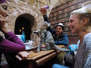 Apre a Parigi il primo caffè dei gatti