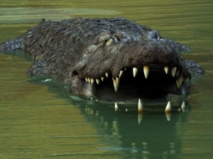 Australia |  donna divorata da un coccodrillo mentre è in gita con la famiglia