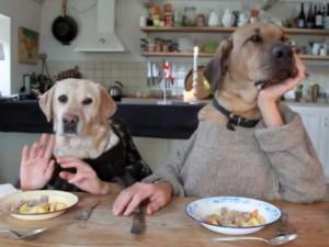 Cani al ristorante e al bar da oggi si pu ma con - Norme igienico sanitarie per le cucine di ristoranti ...