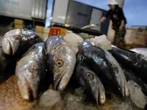 Lo spray che fa sembrare fresco il pesce andato a male: indaga la procura