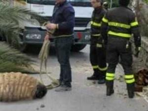Punteruolo rosso gigante trovato in Campania, la bufala diventata virale