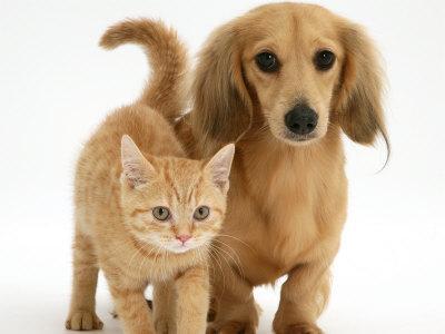 Equitalia pignorer anche cani e gatti l 39 allarme scatena for Cani e gatti da stampare e colorare