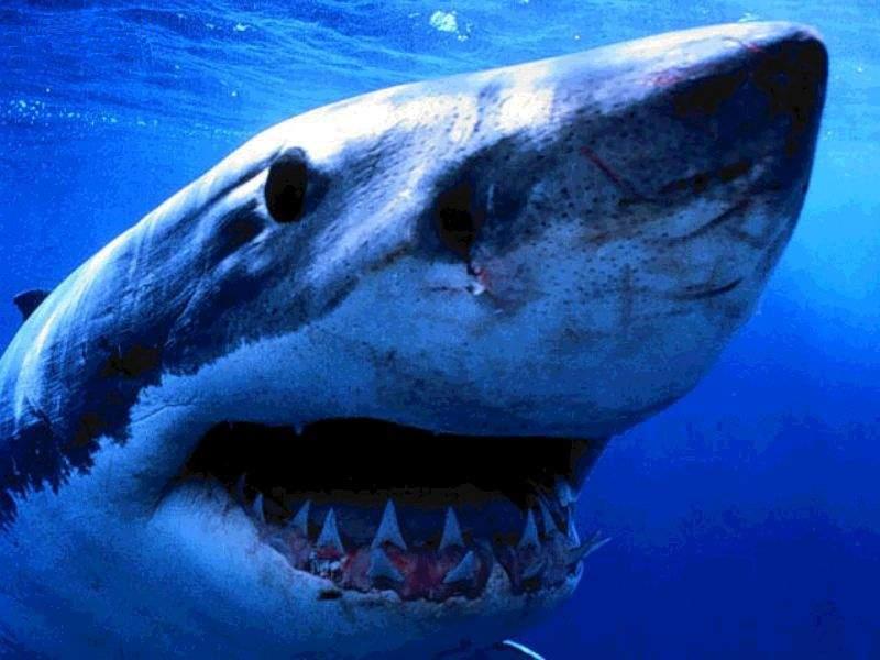 squalo a sharm el sheik uccide una donna mentre faceva il