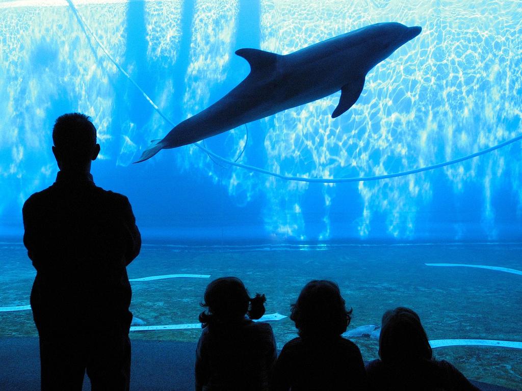 gli acquari più grandi del mondo, alla scoperta dei pesci più belli - Acquario Casa Funzionamento E Prezzi
