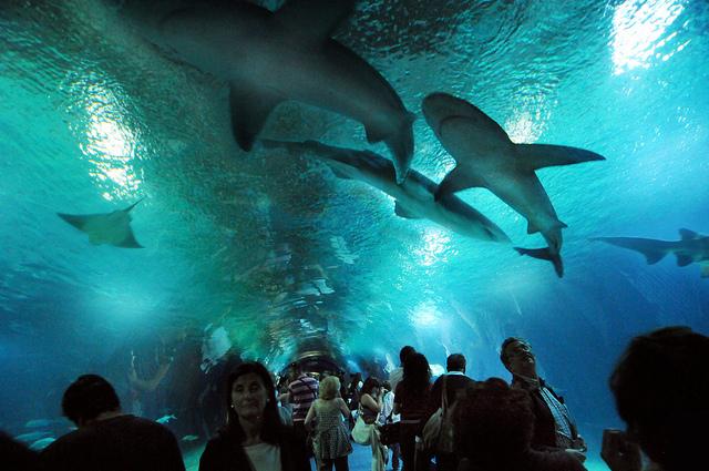 Gli acquari pi grandi del mondo alla scoperta dei pesci for Acquario per tartarughe grandi