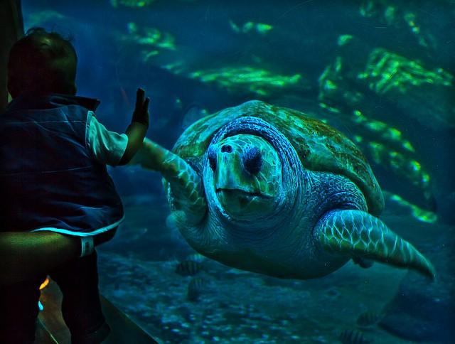Gli acquari pi grandi del mondo alla scoperta dei pesci for Vasca per tartarughe grandi