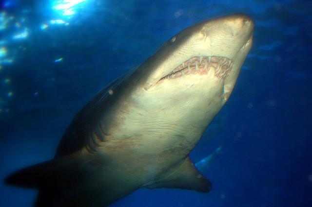Gli acquari pi grandi del mondo alla scoperta dei pesci for Immagini di pesci disegnati