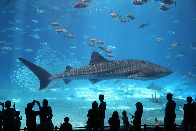 Gli acquari pi grandi del mondo alla scoperta dei pesci - Bagno con gli squali sudafrica ...