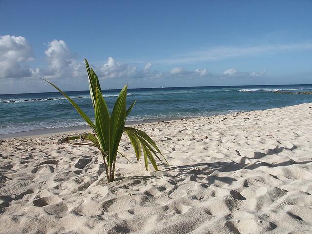 barbados spiagge