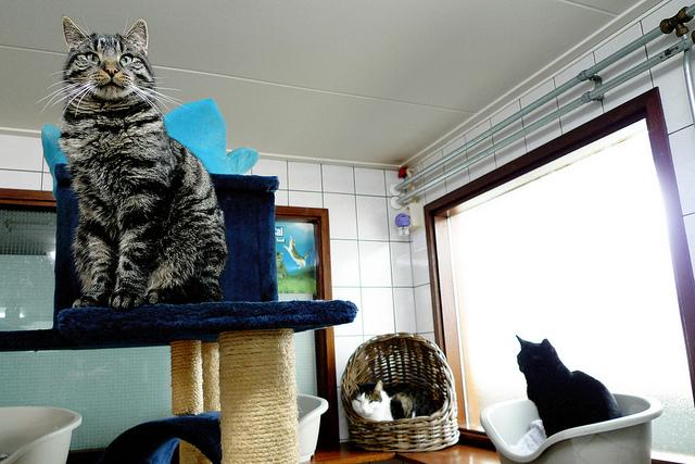 i musei dei gatti a kuching e amsterdam regalit felina