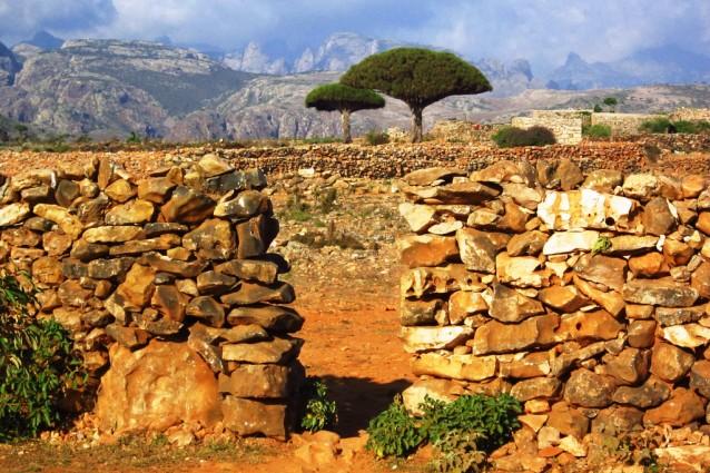 Socotra nello Yemen