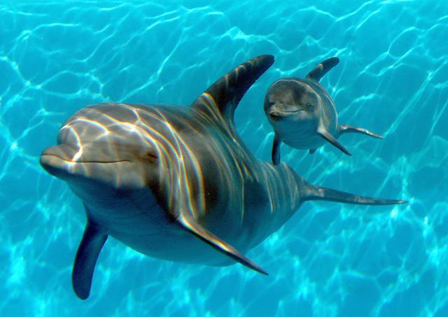 avvistare un delfino mentre navigate in barca nel mare della grecia non una cosa impossibile mentre state facendo il vostro rilassante giro dondolati