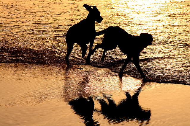 Cani sulla spiaggia (foto di José Carlos Cortizo Pérez)