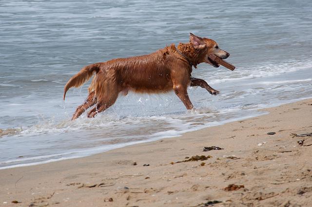 Cane in spiaggia (foto di John Liu)