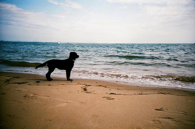 Cane in spiaggia (foto di Nick Page)