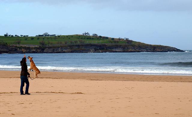 Cane e padrone giocano in spiaggia