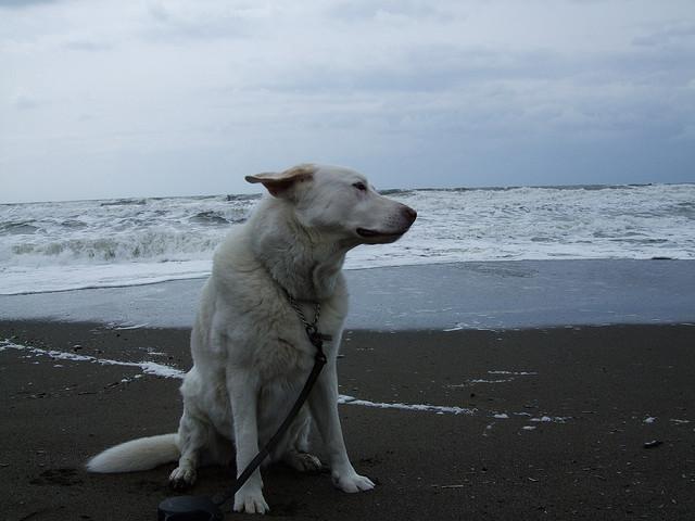 Spiaggia per cani a Marina di Bibbona