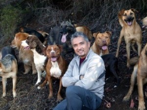 César Millan maltratta gli animali, il video choc di Striscia la Notizia | Tv Fanpage