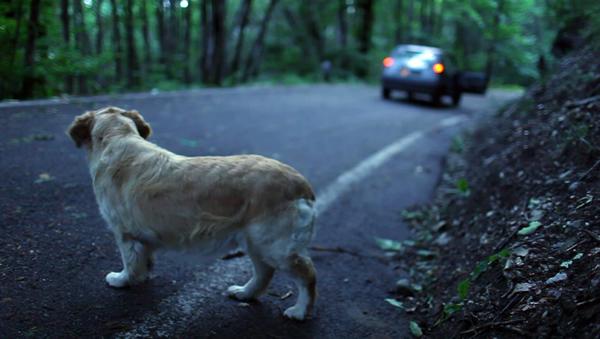 Risultati immagini per Lo getta in strada, cane torna e lui lo fa sopprimere dal veterinario: condannati entrambi